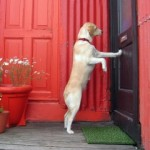 dog-at-door