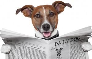 Hond-leest-nieuws-uit-krant