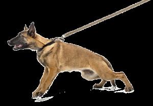 hond-trekt-2