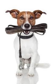 images hond met lijn